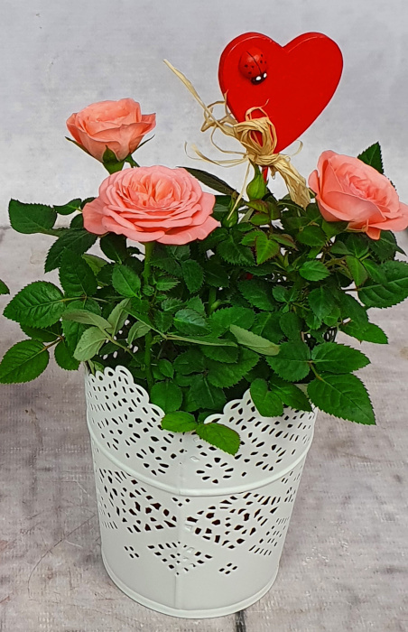 Róża mała w osłonce metalowej + pik Serce (1)