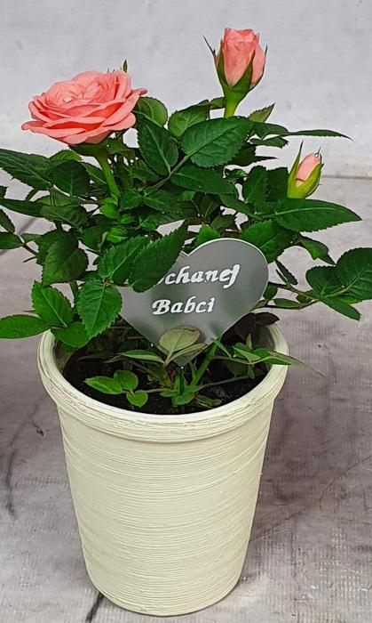 Róża mini w doniczce + pik Kochanej BABCI (1)