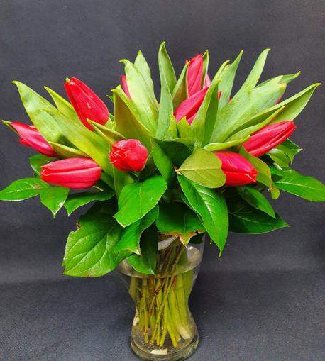 Bukiet tulipanów czerwonych średni (1)