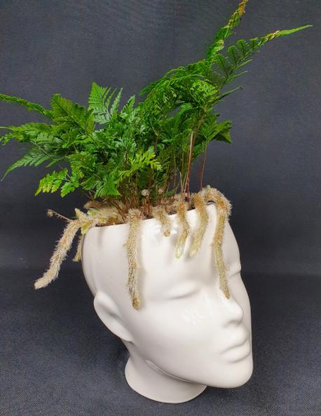 Paproć spider w osłonce ceramicznej - głowa (1)